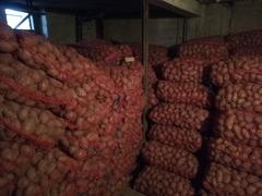 cartofi consum rosu soi laura