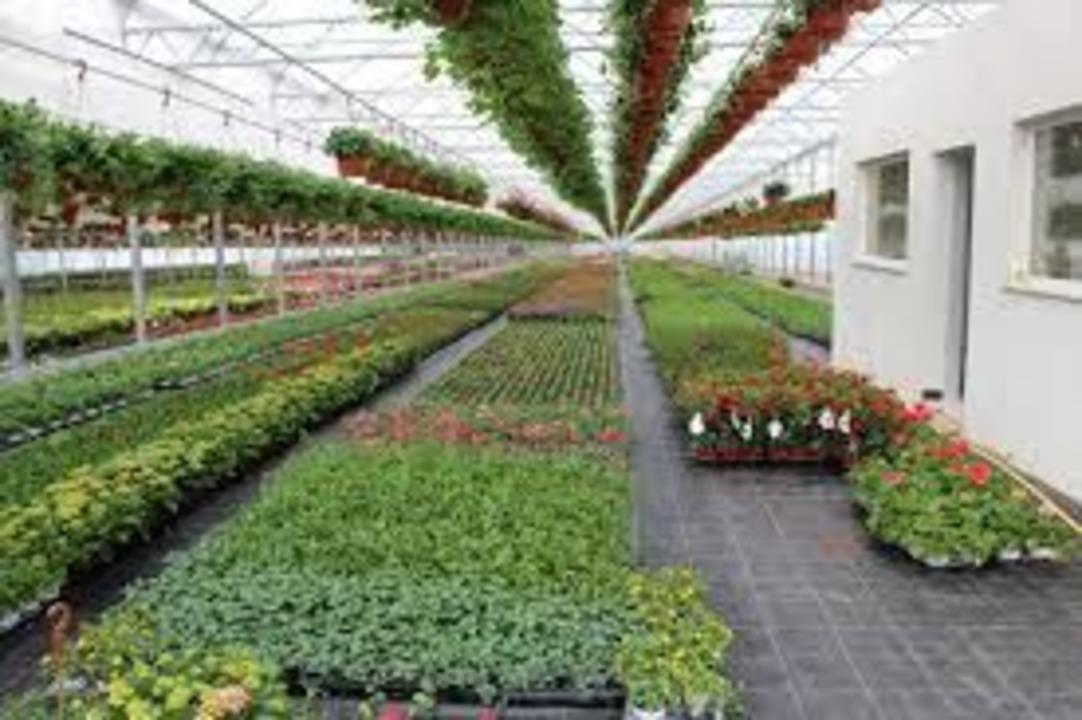 Lucratori in sere cu flori Olanda/ 2100 euro