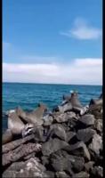 Teren intravilan pe Litoralul Mării Negre