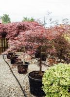 Amenajări grădini/ spații verzi