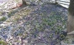 Palinca de: Prune ,Pere, Caise, Cirese ,Struguri,Gutui 52 -53 grade