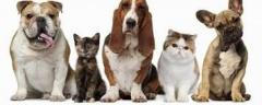 Cabinet veterinar Militari