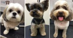 Trendy Pets Otopeni Frizerie canina Tuns caini
