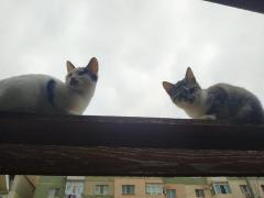 Donez pisici / motani