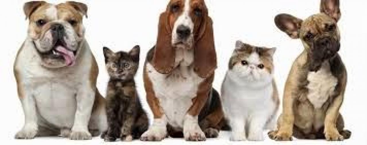Cabinet veterinar Drumul Taberei