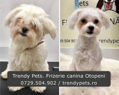 Trendy Pets. Frizerie si cosmetica canina in Otopeni. Tuns
