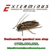 Dezinfectie-Dezinsectie-Deratizare non stop
