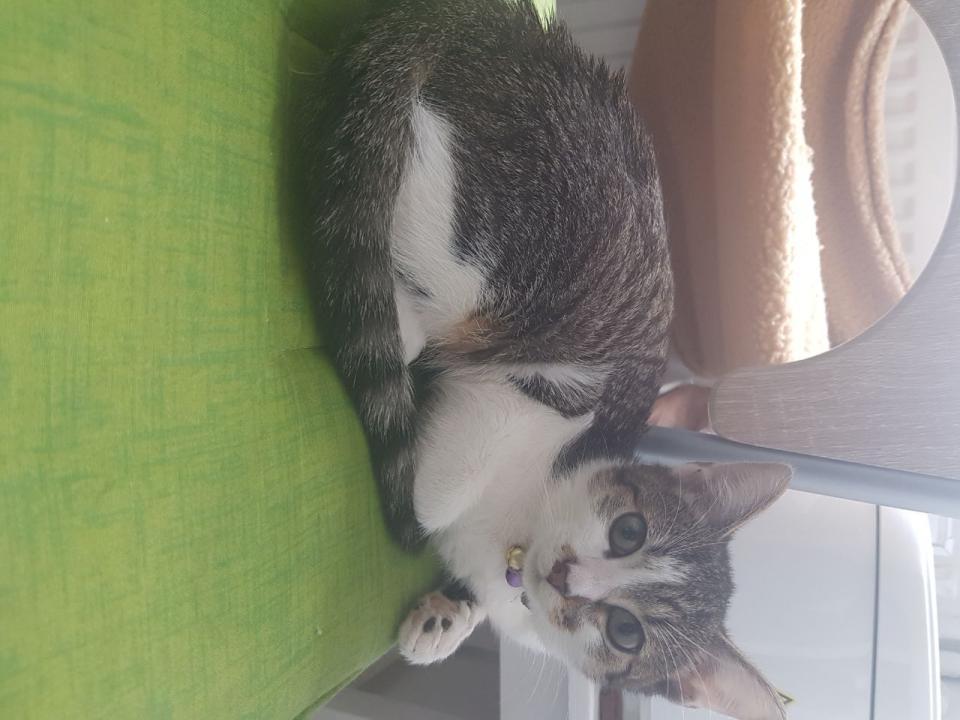 Pisica spre adoptie