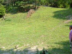 Vanzare teren intravilan Cheile Dambovicioarei 7000 mp