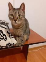 Adopta o minunatie de pisica