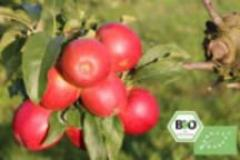 Cules fructe Germania capsuni afine mure zmeura