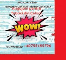 Angajam muncitori in Cehia