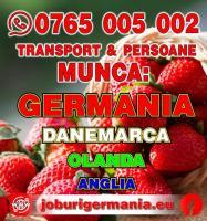 Se cauta SEF DE PRODUCTIE pentru o ferma de fructe si legume din GERMANIA !