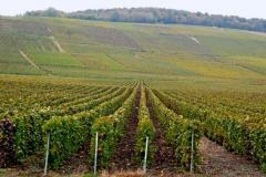 Teren 7,85 hectare vie tanara Radeni-Frumusica Botosani
