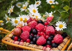 sortat fructe de padure germania