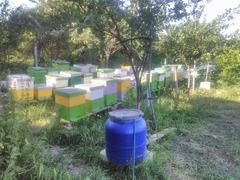 Familii de albine pe 10, rame 3/4. Miere100% naturala
