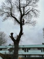 Tai copaci mari Ilfov și județele alaturate