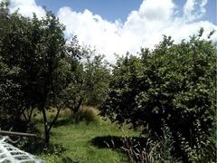 Teren in Lupeni