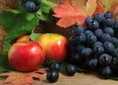 hale de fructe germania